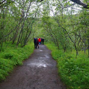 איפה הם, היערות של איסלנד?