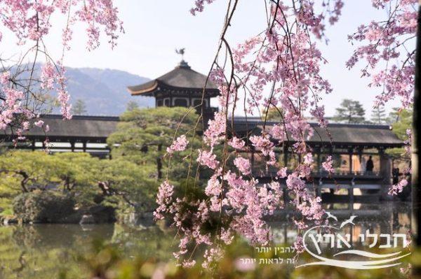 פריחת הדובדבן ביפן | חבלי ארץ