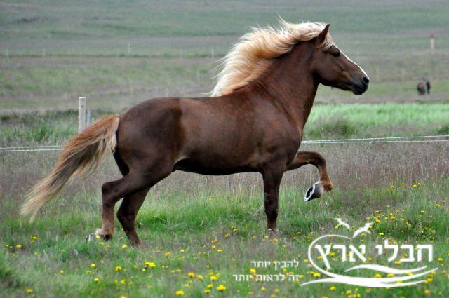 בשר סוסים